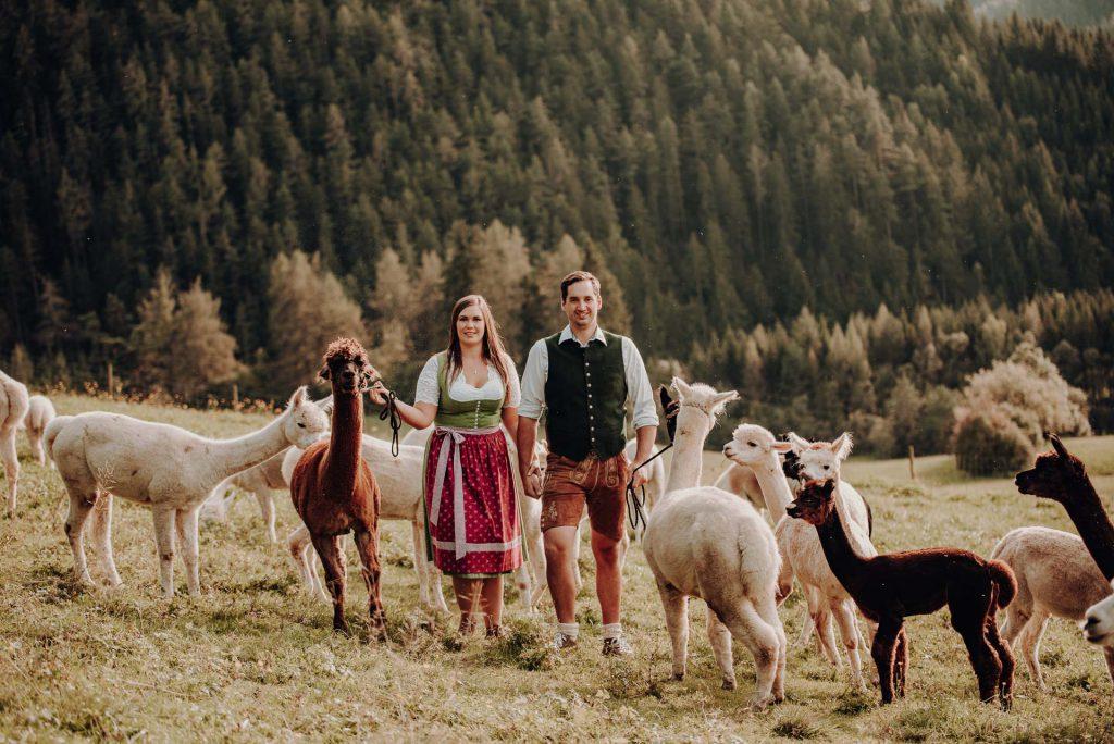 Bergland-Alpakas