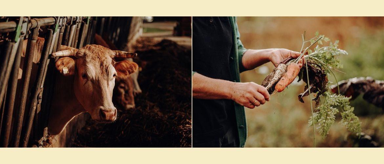 Bauernhof mit Hand, Herz und Hirn
