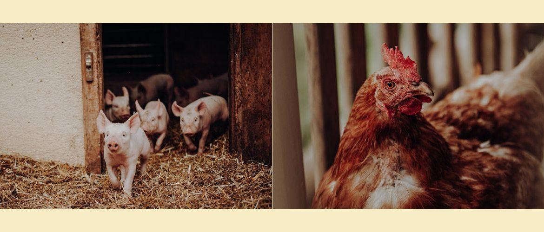 Vielfalt am Bio-Bauernhof